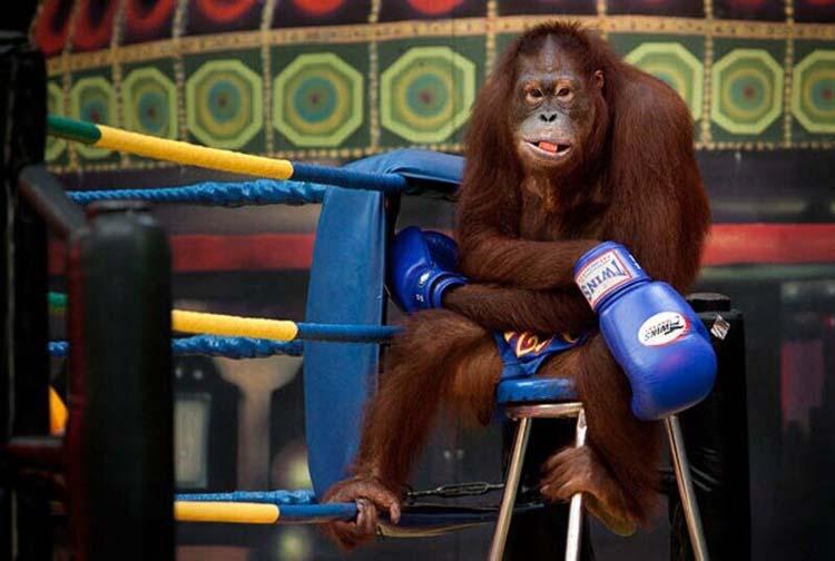 анекдот про боксера